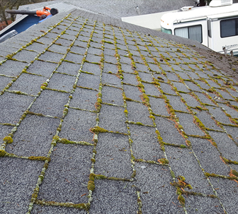 Roof Moss Removal In Kirkland