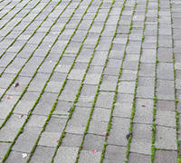 Roof Cleaning & Moss Removal Battle Ground WA, Vancouver - moss2