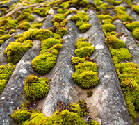 Roof Cleaning & Moss Removal Battle Ground WA, Vancouver - moss3